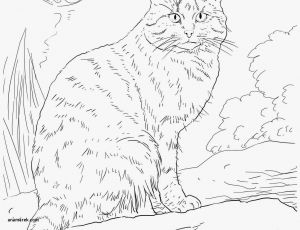 Mandala Art Coloring Pages - Coloring Page to Print Animal Mandala Lovely Cat Printable Coloring Pages New Cool Od Dog 16l