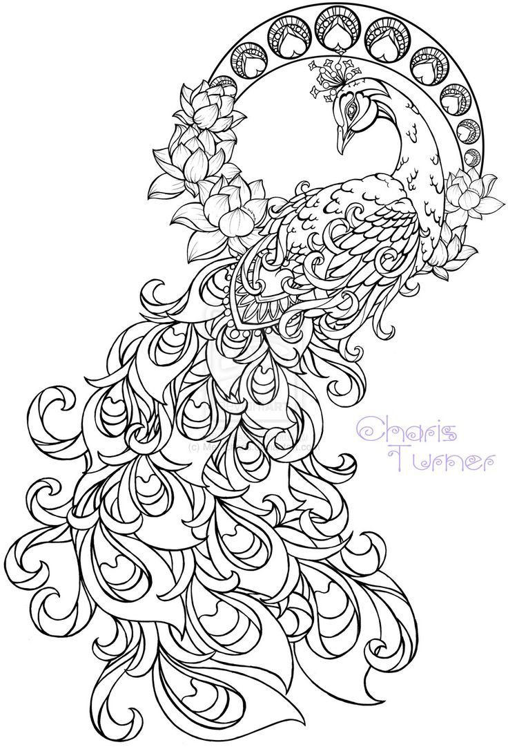mindfulness coloring pages Download-Realistic peacock coloring pages free coloring page printable 8-h