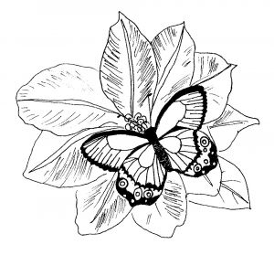 Printable Coloring Pages Of Flowers and butterflies - Detailed Coloring Pages for Adults Printable Kids Colouring Pages butterfly and Flower Coloring Pages for Adults 17i