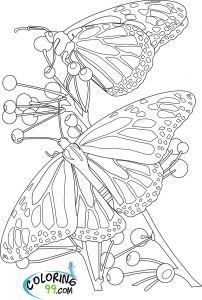 Printable Coloring Pages Of Flowers and butterflies - butterfly with Flowers Coloring Pages Printable Difficult Coloring Pages butterfly Coloring Pages Adults 16d