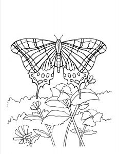 Printable Coloring Pages Of Flowers and butterflies - Awesome butterfly and Flower Coloring Pages Download 13 T butterfly and Flower Coloring Pages 12o