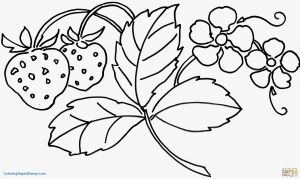 Printable Coloring Pages Of Flowers and butterflies - Flower Coloring Pages Pdf Luxury Strawberry Coloring Pages Unique Strawberry Flower Coloring Page 19 New 5p