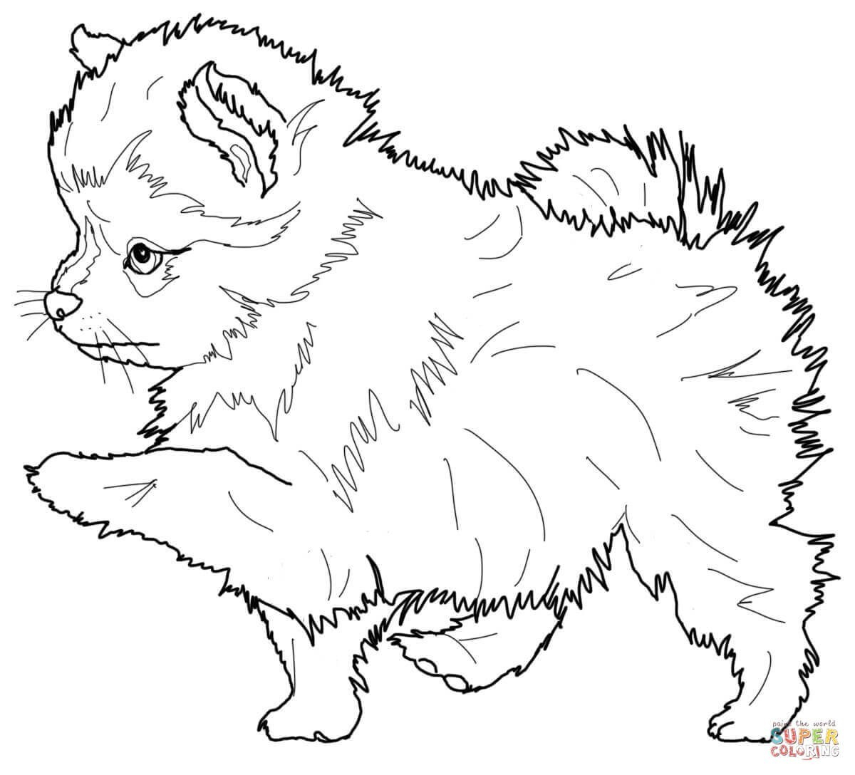 printable coloring pages of wolves Collection-Coloring Pages Wolves Printable Puppy Coloring Pages Fresh Printable Od Dog Coloring Pages 2-c