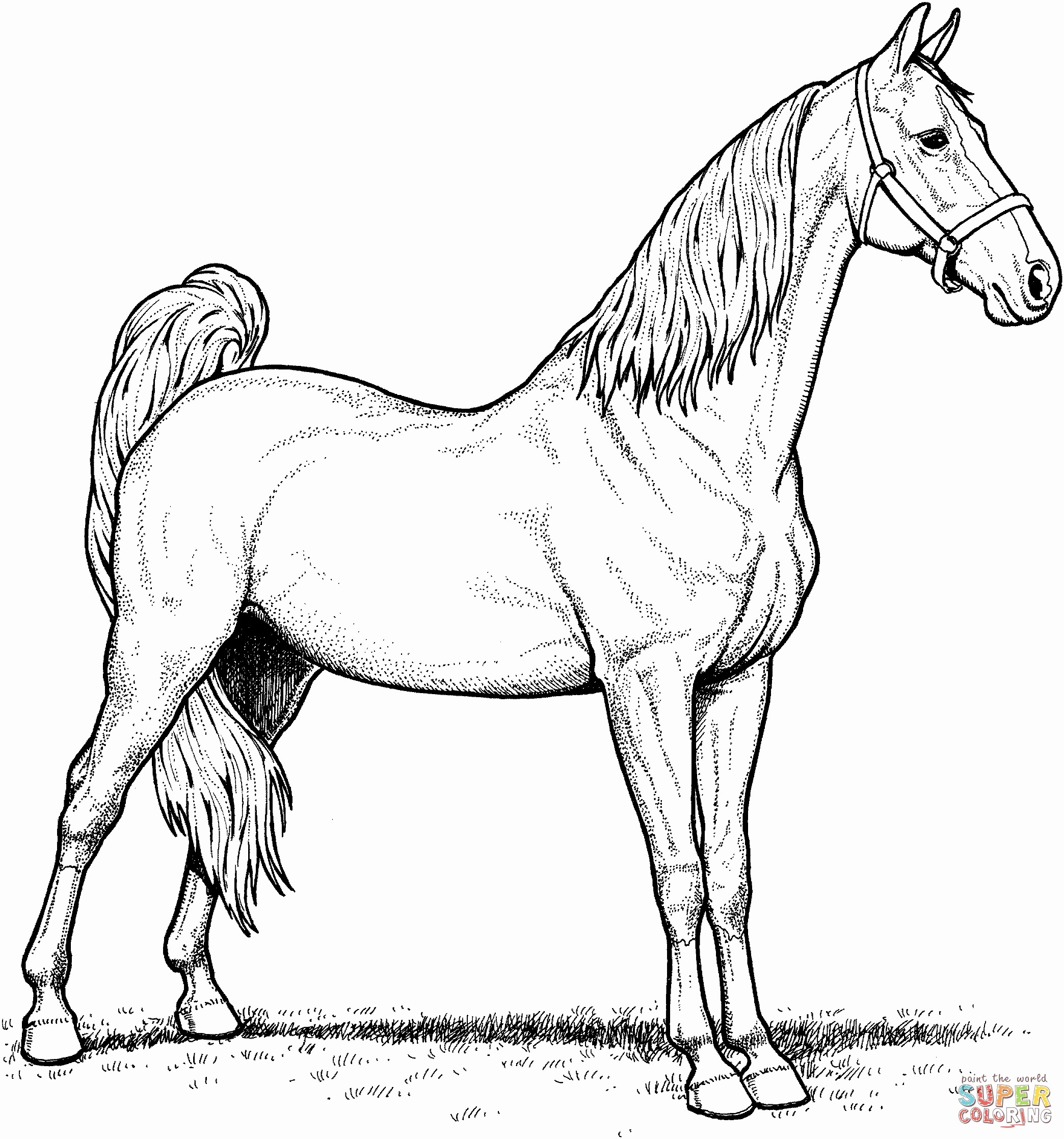 29 Real Horse Coloring Pages to Print Collection - Coloring ...
