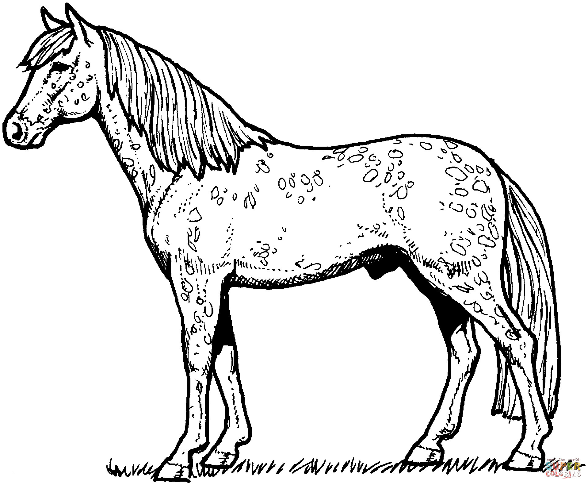 29 Real Horse Coloring Pages to Print Collection - Coloring Sheets