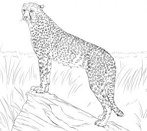 Realistic Fox Coloring Pages - Fresh Realistic Fox Coloring Pages 9g