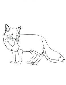 Realistic Fox Coloring Pages - Fox Coloring Pages Printable 18c