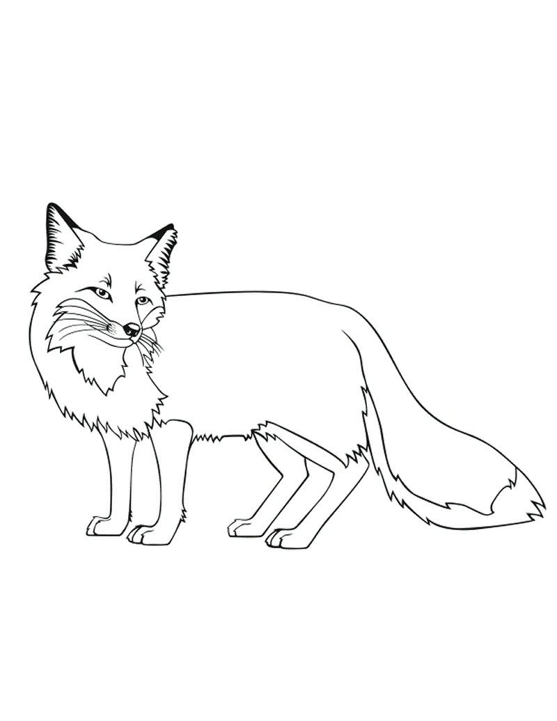 realistic fox coloring pages Collection-Fox Coloring Pages Printable 12-s