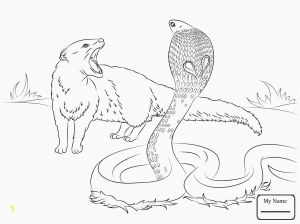 Realistic Fox Coloring Pages - Real Animal Coloring Pages Fresh Animal Printable Coloring Pages Real Animal Coloring Pages Beautiful Coloring 2t