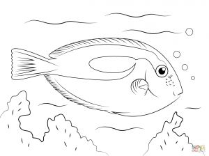 Saltwater Fish Coloring Pages - Best 256 Best Kids Coloring Pages Pinterest Cool Fish to Color 7f