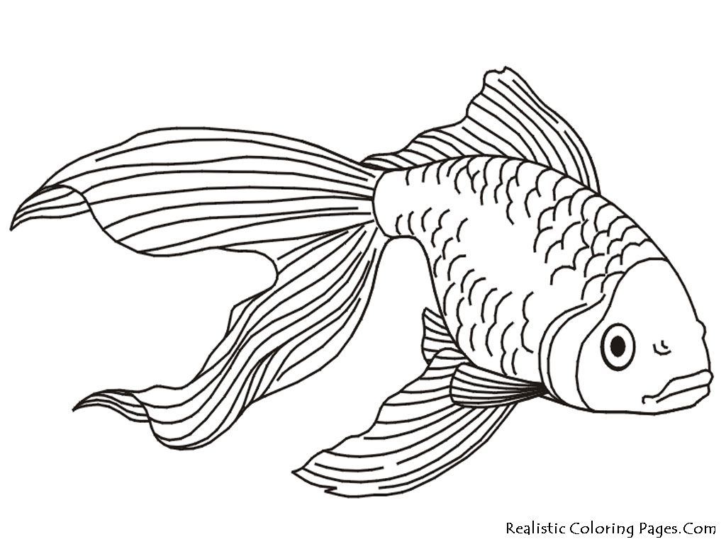 saltwater fish coloring pages Collection-Tropical Fish Coloring Pages 9-s