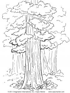 Tree Coloring Pages - Copic Color Pages Google Search 11j