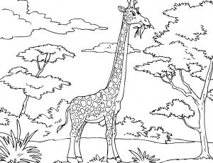 Webkinz Coloring Pages - Safari Coloring Pages African Safari Coloring Pages Inspirational Giraffe Coloring Page 15d