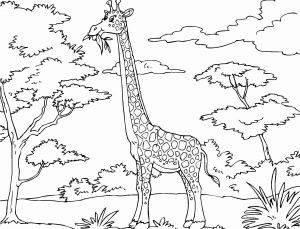 Webkinz Coloring Pages - Giraffes to Color New Giraffe Coloring Pages Cool Coloring Pages Ruva 15b