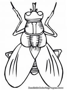 Winged Cat Coloring Pages - Cartoon Insect Coloring Pages 8d